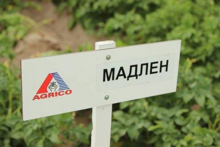 День поля Агрико Украина на базе СФХ «Межиричка»