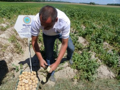 День Поля в Інституті Картоплярства НААН (Немішаєве)