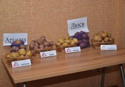 Мастер-класс по выращиванию картофеля (Львов 17 декабря 2015г.)