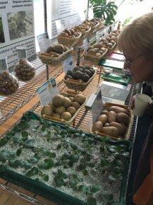 Майстер-клас з вирощування картоплі (Вінниця 28 січня 2016р.)