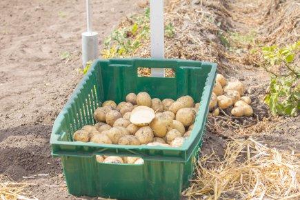 III Національний День Картоплі