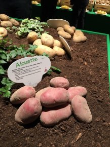 Agrico Variety & Seedling Show - 2016