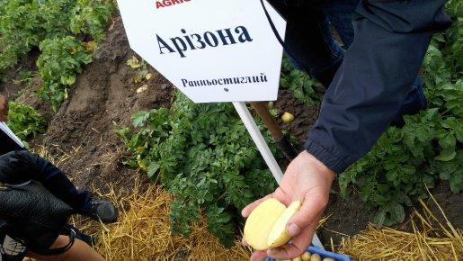 Відвідати День поля в Немішаєві: виконано!