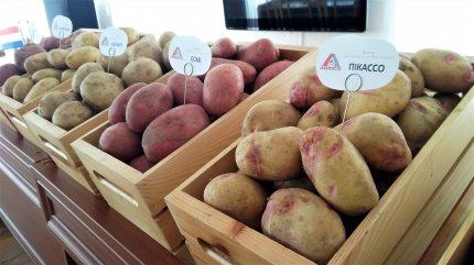 Выращивание картофеля на Востоке Украины