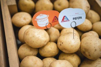 Главное картофельное событие в Семиполках
