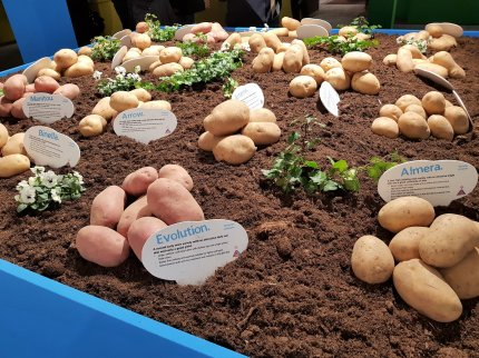 Agrico Variety & Seedling Show - 2018