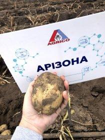 Картофельный блокчейн